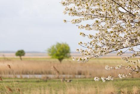 3 Servan Ott Fotografie - Natuurfotografie en Trouwfotografie-9670