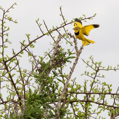 2 Servan Ott Fotografie -- Natuurfotografie en Trouwfotografie-4651