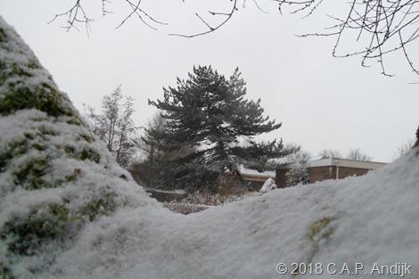 KNMI Code Geel - Morgenochtend van het westen uit (lichte) sneeuw