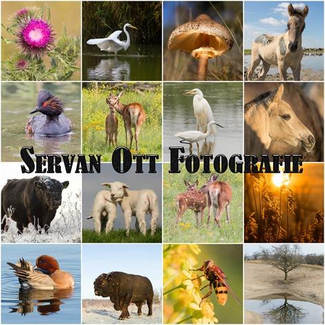 Servan Ott Fotografie Collage