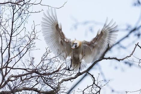 Servan Ott Fotografie - Natuurfotografie en Trouwfotografie-8256