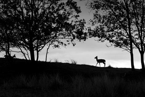 Servan Ott Fotografie - Natuurfotografie en Trouwfotografie-0075