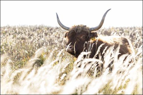 Servan Ott Fotografie -- Natuurfotografie en Trouwfotografie-0874