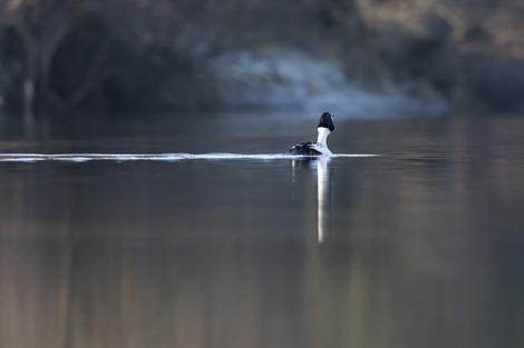 Servan Ott Fotografie - Natuurfotografie en Trouwfotografie-4516
