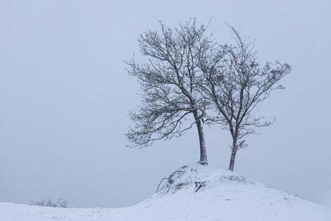 Servan Ott Fotografie - Natuurfotografie en Trouwfotografie-5618
