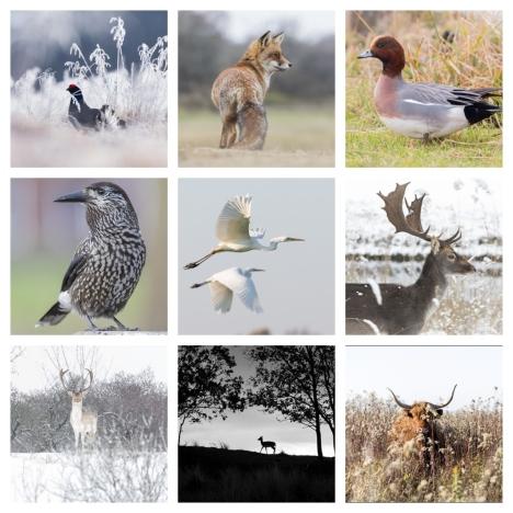 Servan Ott Fotografie publiceert wekelijks foto's gemaakt tijdens workshops in natuurgebieden in Nederland