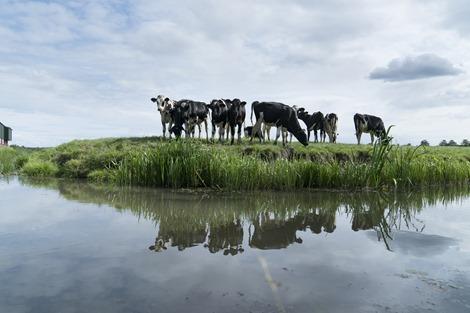 Boer vraagt frisse blik  -  Creatieve geesten gezocht voor problemen van boeren