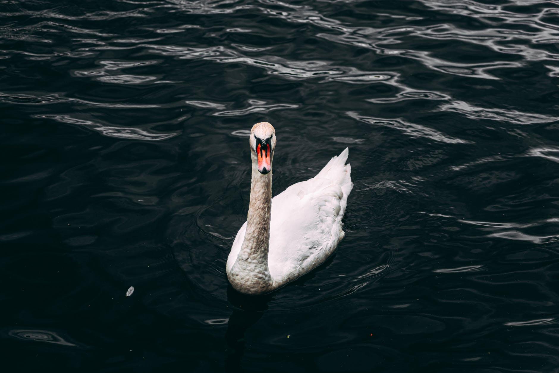 Negatief zwemadvies IJsselmeerwater bij Andijk