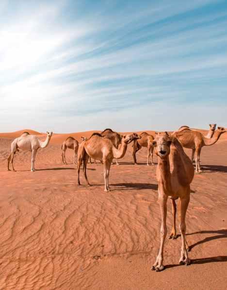 Zijn er al kamelen gesignaleerd in de Polder Het Grootslag   Donderdag ook Code Oranje: heter dan vandaag!