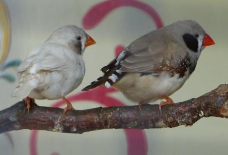 Tropische vogeltjes in het Streekbos