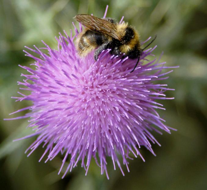 Provincie investeert ruim € 270 miljoen in natuur en biodiversiteit