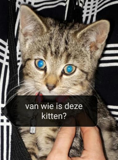 Politie: Kittens aangetroffen in berm: getuigen gezocht! #Hauwert