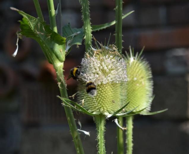 Ecologisch beheer voor meer wilde bijen