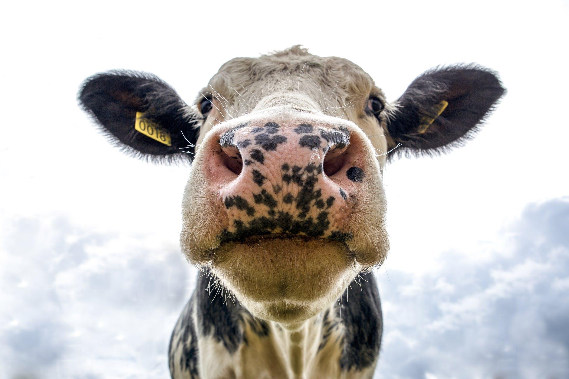 Noord-Holland helpt jonge boeren bij verduurzaming van hun bedrijf
