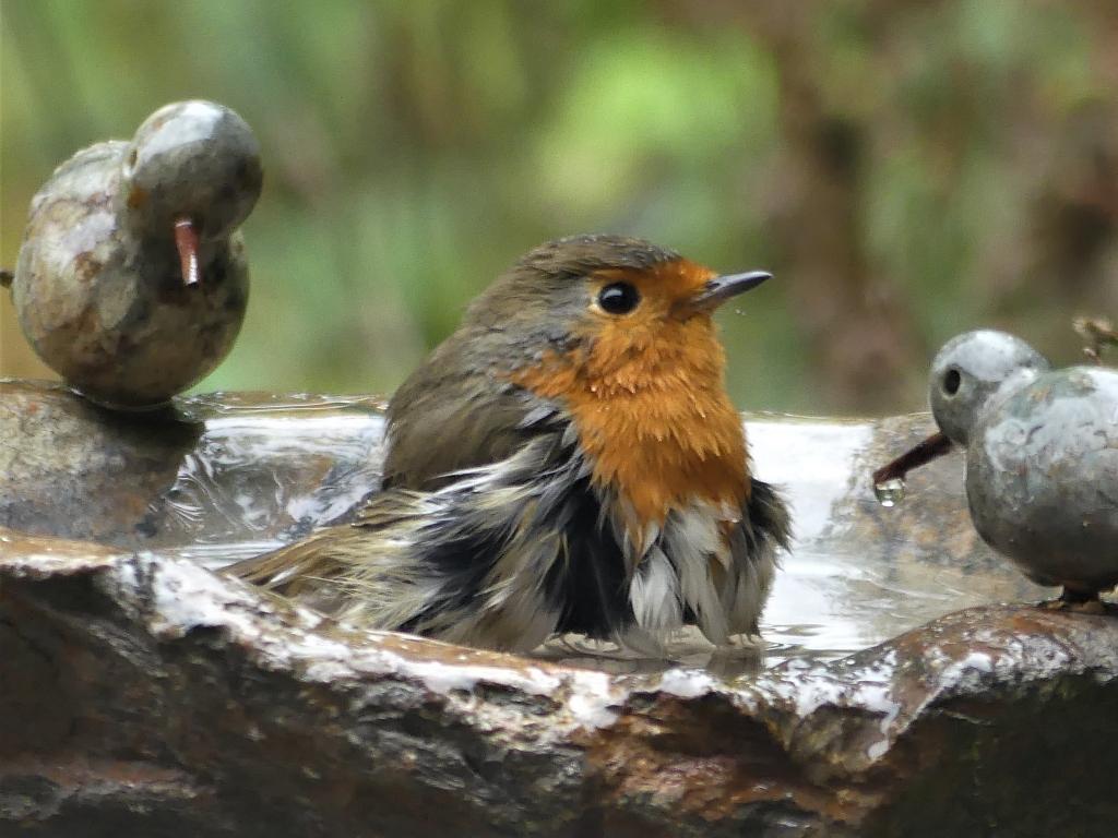 Boeiende vogelverhalen bij het IVN