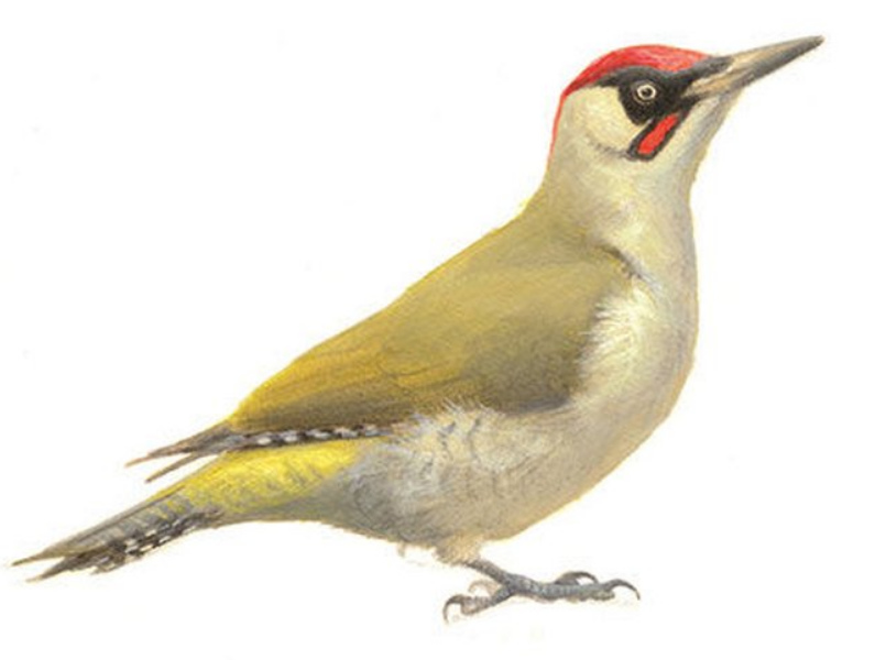 Nationale Tuinvogeltelling: bijna 900 vogels geteld in Andijk