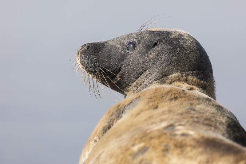 Servan Ott Fotografie: Jonge zeehond op de pier van IJmuiden