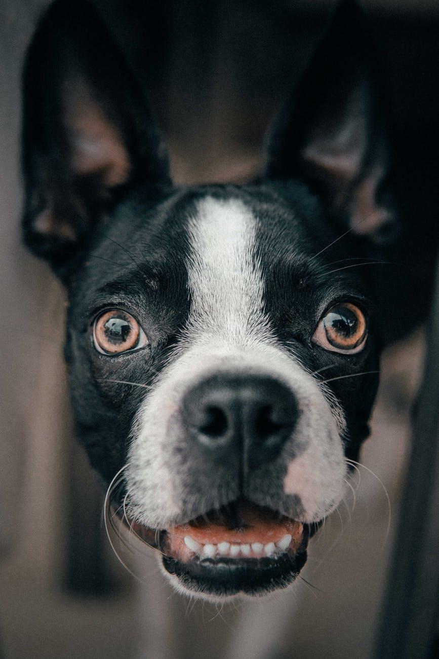 Controle hondenbelasting gaat van start