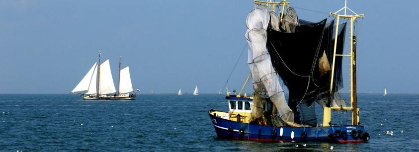 De EK 49 van de fa. J. Klaassen op het IJsselmeer voor de kust van Andijk - foto © G. van Keulen