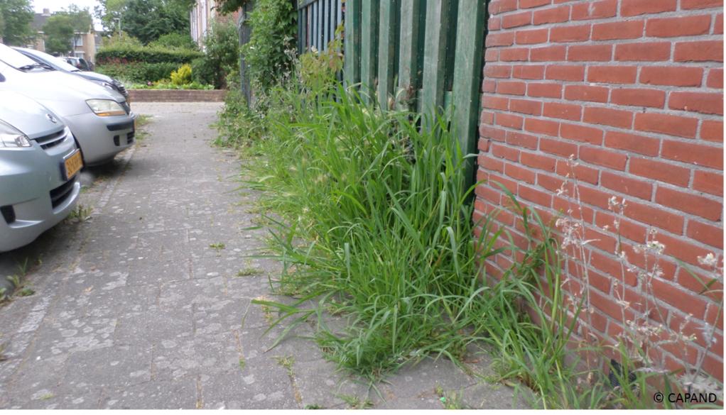 D66 Medemblik stelt raadsvragen over onkruid(bestrijding) in de gemeente - Foto © CAPAND