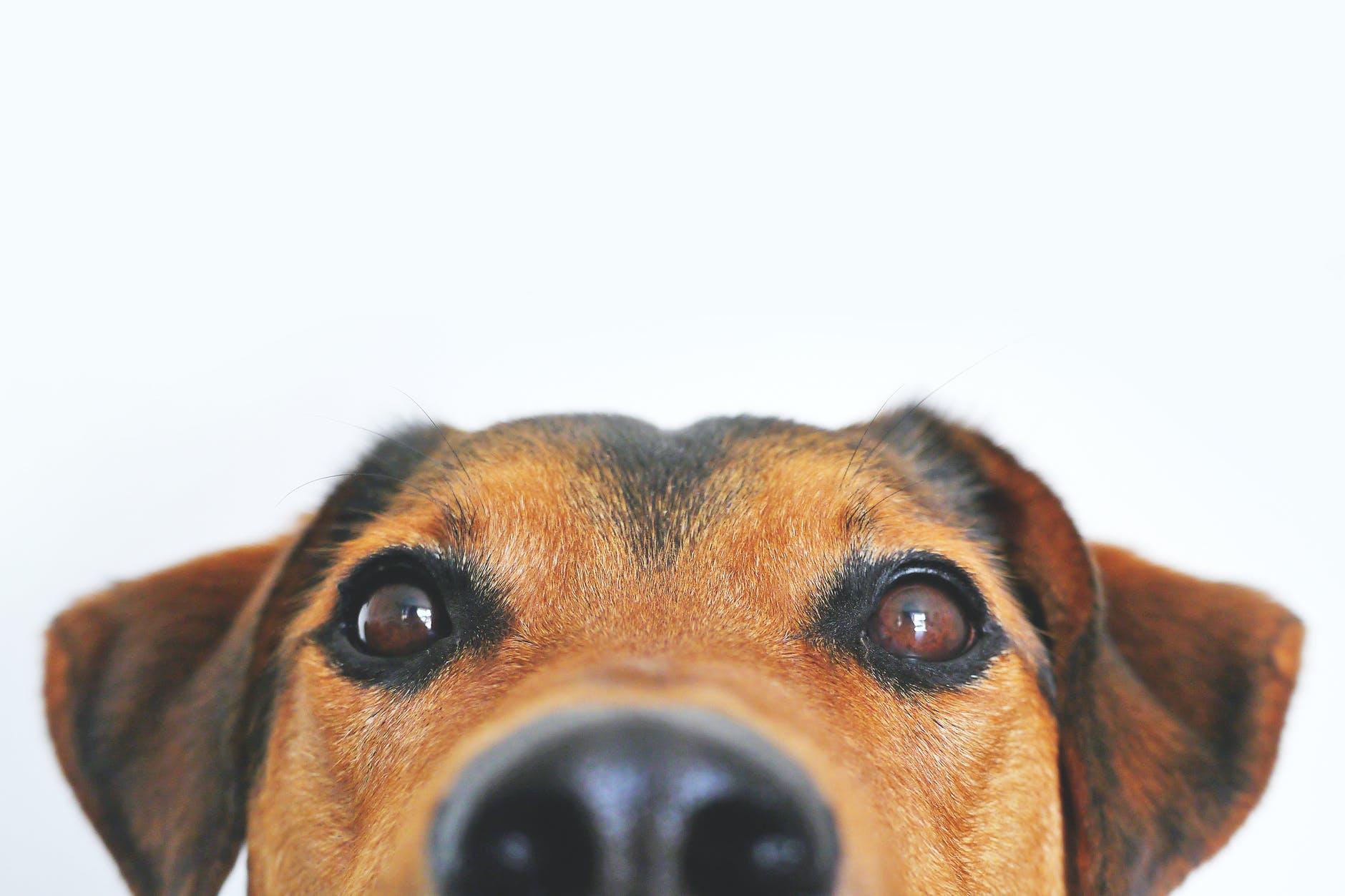 De controle hondenbelasting gaat van start