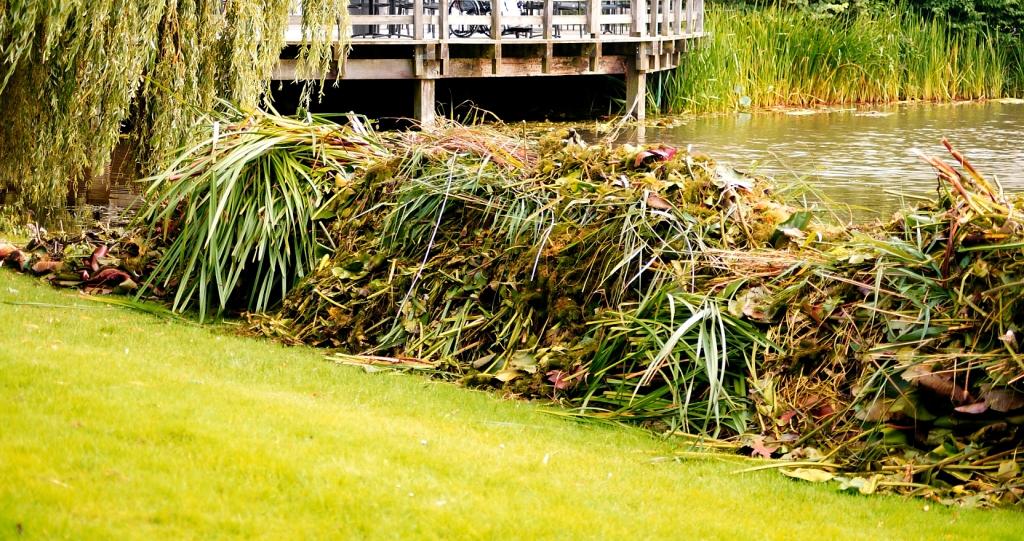 waterplanten die, eenmaal afgesneden, op de walkant worden gedeponeerd waar het kan inklinken en drogen voordat het uiteindelijk zijn weg vindt naar een composthoop.