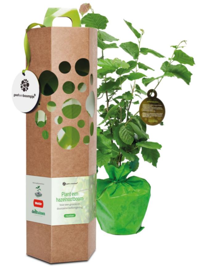 Ontdek jouw groene kennis met de 'Vergroenquiz' en maak kans op een hazelnootboom